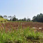 The Water Project: Emusaka Community, Manasses Spring -  Farmland