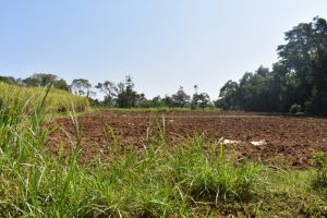 The Water Project:  Farmland