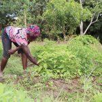 The Water Project: Lungi, Yongoroo, #7 Kamara Taylor Street -  Woman Weeding