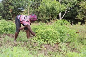 The Water Project:  Woman Weeding