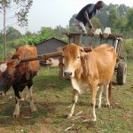The Water Project: Elwichi Community, Mulunda Spring -  Delivering Construction Materials By Cart