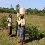 The Water Project: Emutetemo Community, Lubale Spring -  Water From Lubale Spring En Route To Use