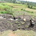 The Water Project: Mabanga Community, Ashuma Spring -  Planting Grass Above Catchment Area