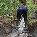 The Water Project: Isanjiro Community, Musambai Spring -  Drainage Opening