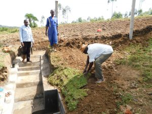 The Water Project:  Zebedayo Mutsotsi Planting Grass