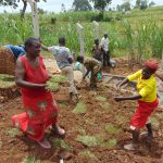 The Water Project: Shihome Community, Oloo Njinuli Spring -  Grass Planting